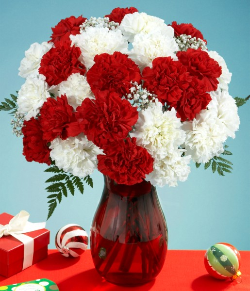 Two Dozen Candy Cane Carnations