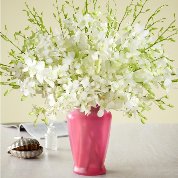 White Dendrobium Orchids Meaning White Dendrobium Orchids