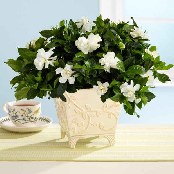 outdoor potted flowering plants
