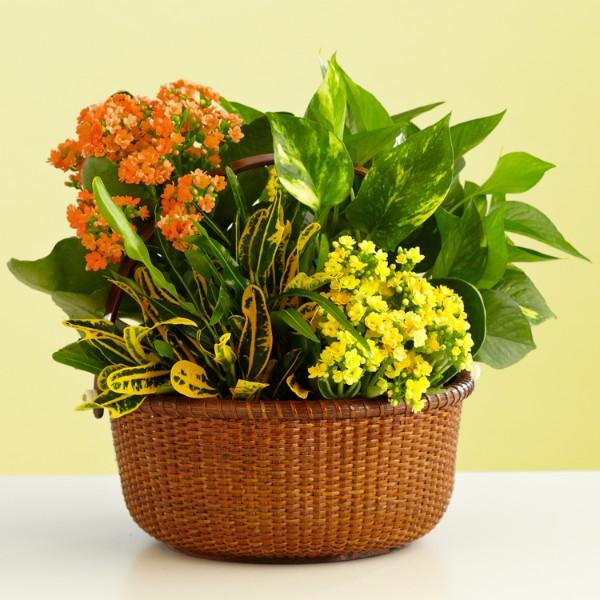 fall garden basket. Black Bedroom Furniture Sets. Home Design Ideas