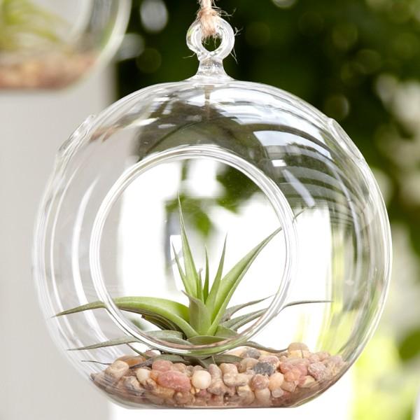 air plant terrarium globe