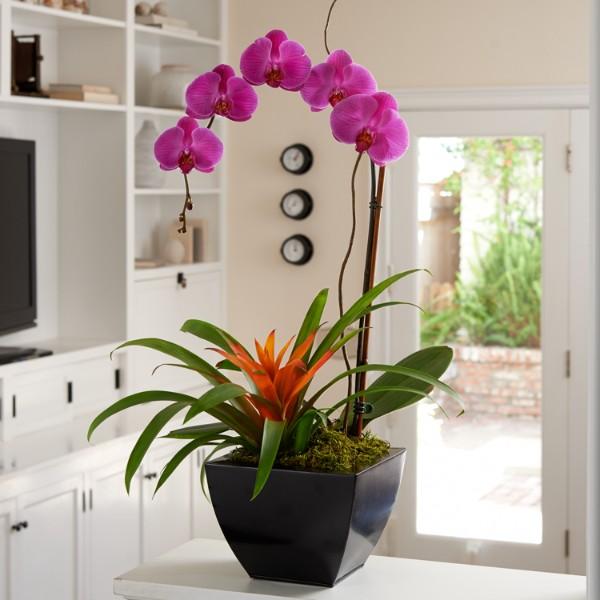 Exotic Orchid Garden