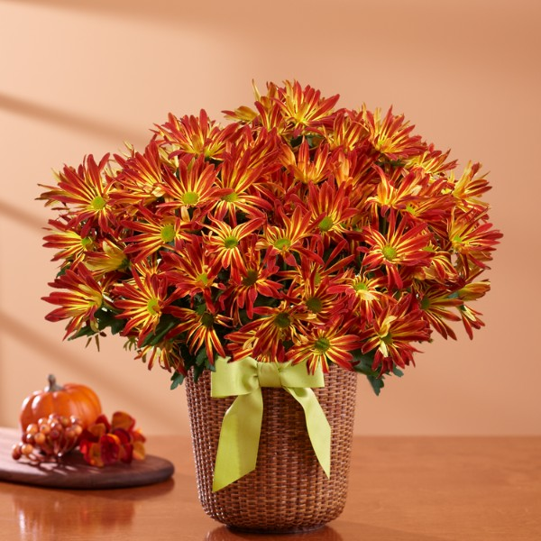 Potted fall mum - Potted autumn flowers ...