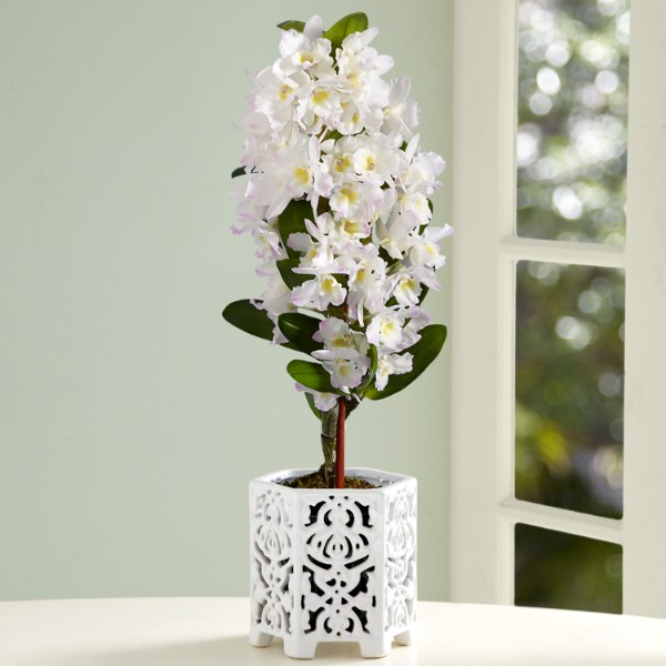 White Dendrobium Orchids Meaning Pearly White Dendrobium Orchid