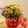 Deals on Proflowers Coupon: Extra 20% Off Halloween Bouquets and Gifts